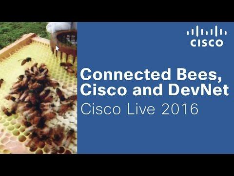 Connected Bees, Cisco And DevNet At Cisco Live 2016